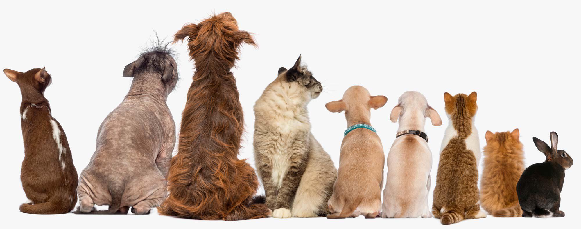 VETS – Kleintierzentrum – Aus der Sicht von Tieren