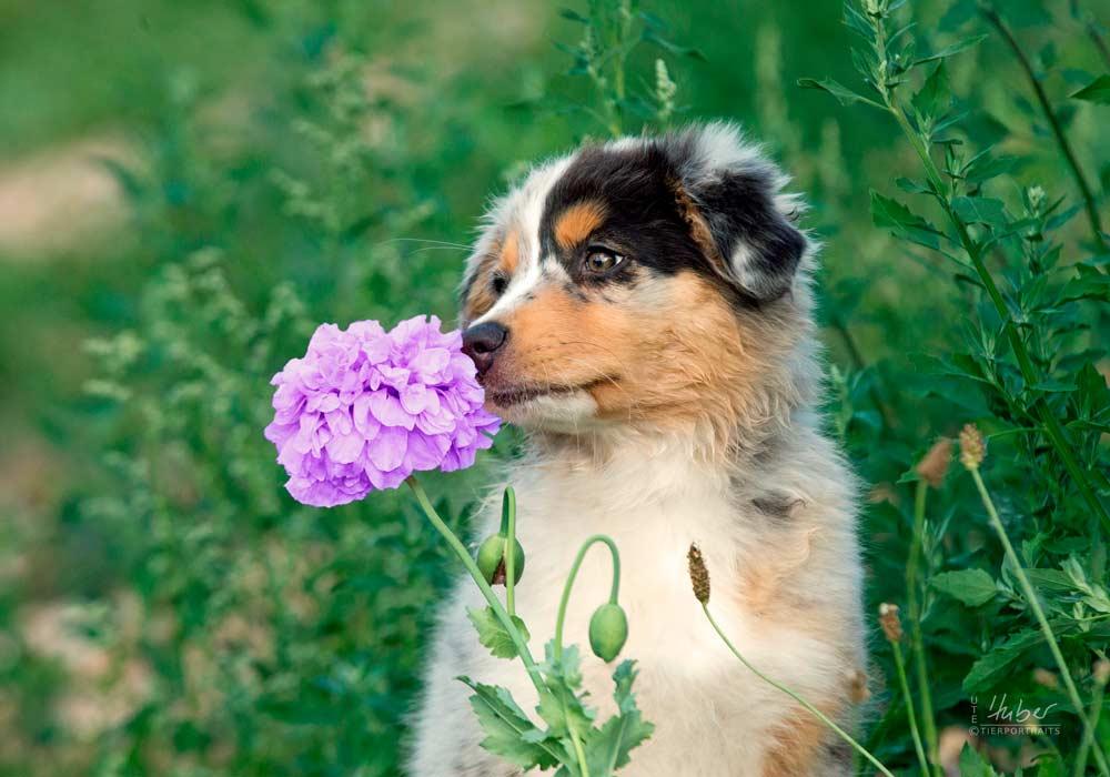 VETS – Wartebereich Hunde