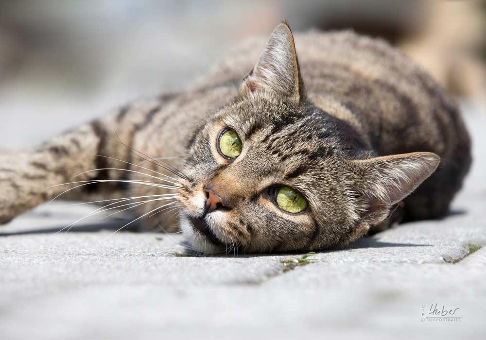 VETS – Wartebereich Katzen